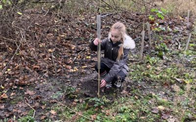 New trees planted at Underhill Park